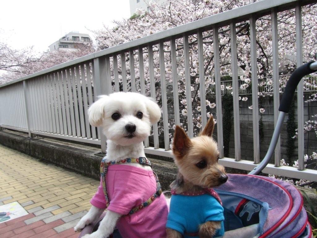 桜とマー君リッチ君